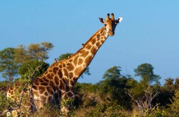 avoid-safari-mishaps-with-good-advice